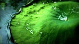 The Flashbulb - Undiscovered Colors (BBC.Invisible Worlds).mp4