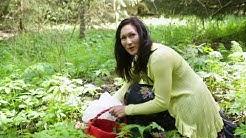 Nokkosen käyttö rohdoskasvina