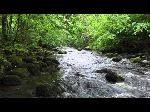 A short Meditation of Nature Sounds-Relaxing Birdsong-Calming Sound of Water Relaxation