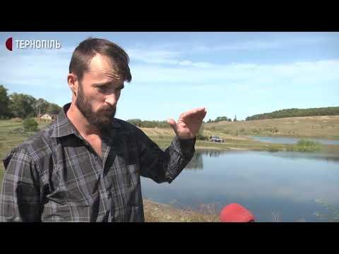 Суспільне. Тернопіль: У ставку на Тернопільщині загинула риба