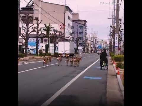 Животные возвращают себе города!