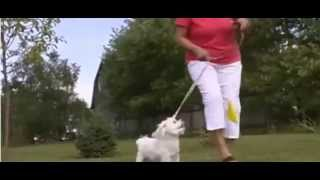 Dog Guard Out Of Sight Fencing For Illinois & Iowa