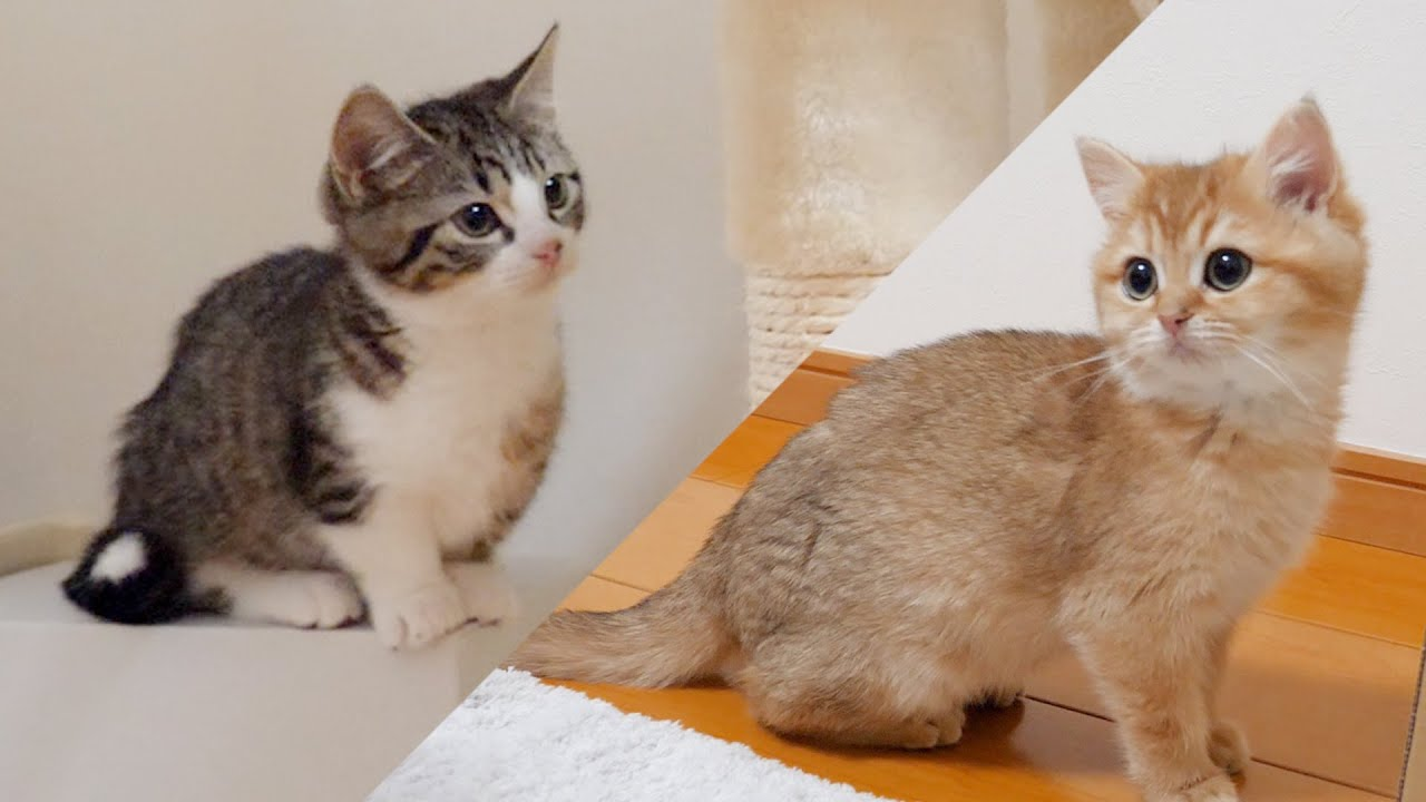 The method of reconciliation of kittens is cute