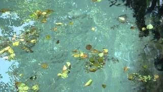 Святой источник под Лоской Черниговская область(Святой источник под Лоской Черниговская область., 2013-11-07T01:37:40.000Z)