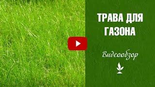 видео где купить газонные травы