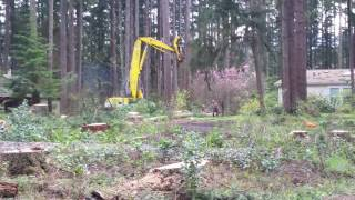 Timber Fallers Logging with Forestry Machine Western Washington