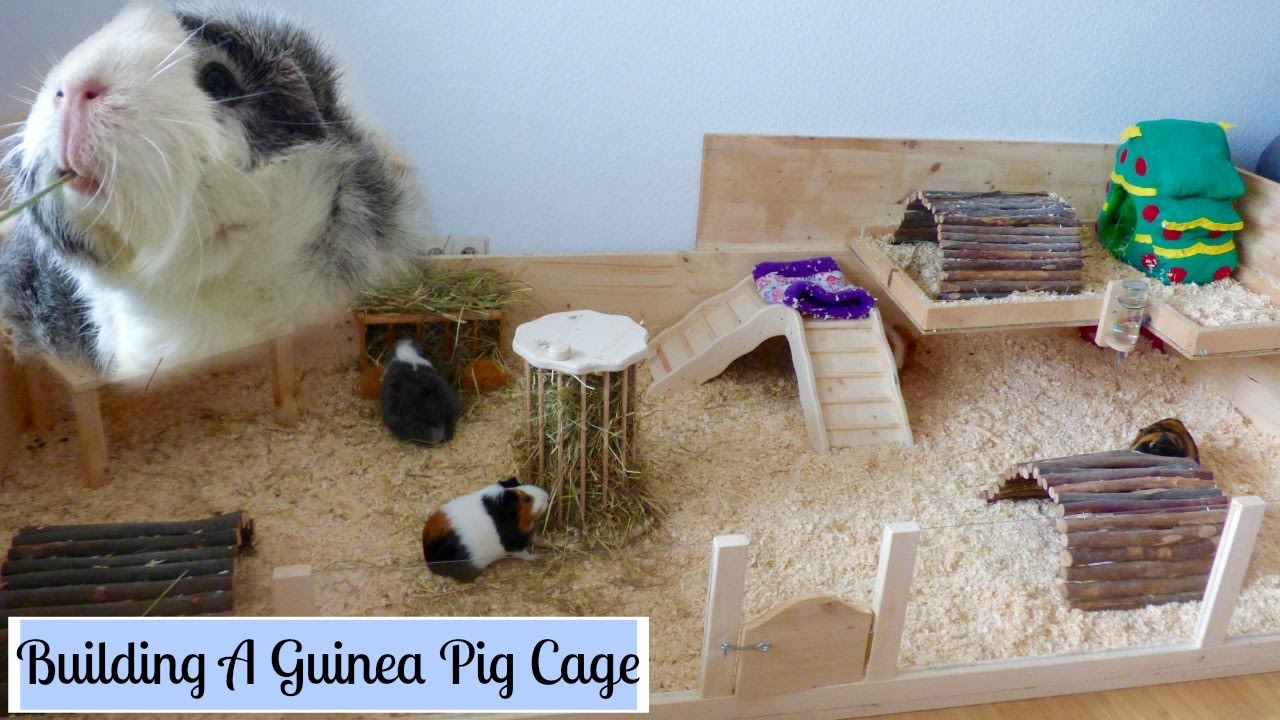 How to build your own wooden guinea pig cage diy cage for Diy guinea pig hutch