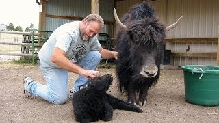 We revisit the 2008 NYS Sheep and Wool festival. We have a chat wit...