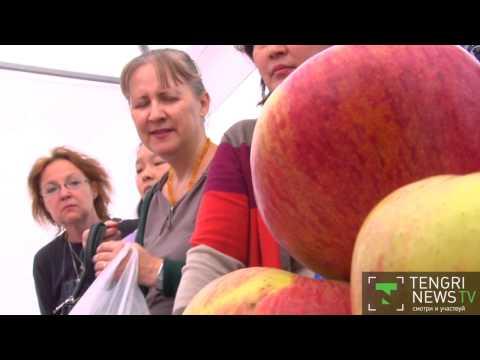 Яблоко- рекордсмен выбрали на Apple Fest в Алматы