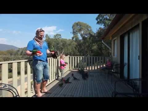 Hand Feeding Wild Australian Parrots thumbnail