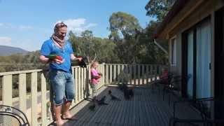 Hand Feeding Wild Australian Parrots(Hand feeding wild parrots in the Australian outback., 2014-01-18T15:39:32.000Z)