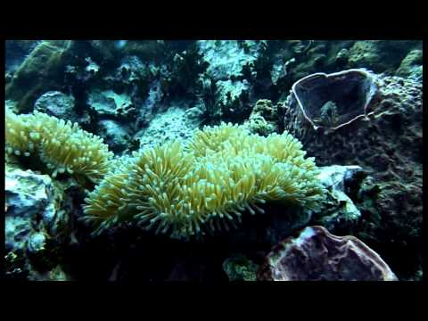 Open Water diving course at Koh Tao, Thailand with Roctopus Dive!