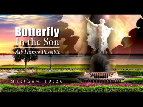 All Things New Butterfly In The Son