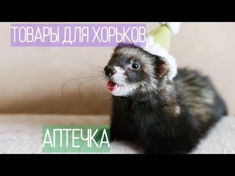 ЧТО купить ХОРЬКУ/ ТОВАРЫ ДЛЯ ХОРЬКОВ /Аптечка хорька