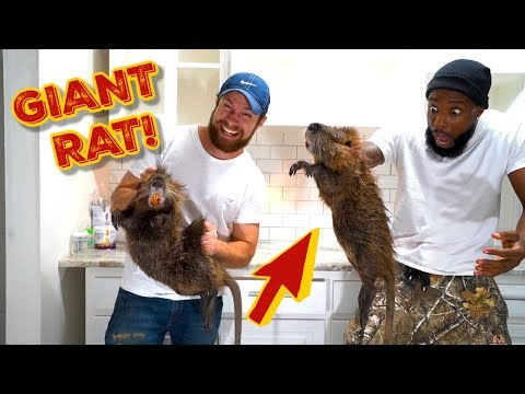 CATCHING & COOKING GIANT NUTRIA RATS SOUTHERN STYLE!