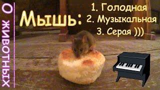Музыкальные Мыши - Доедают После Нас!(, 2015-10-19T04:00:00.000Z)
