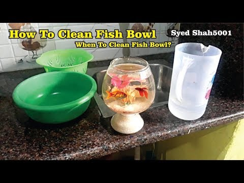 How to Clean a Fish bowl - how to change water in bowl सफाई कैसे करें fishbowl