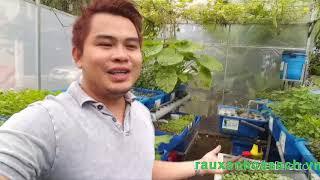 Gambar cover Aquaponic system Viet Nam