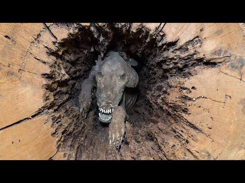 Erstaunliche Mumifizierte Tiere, die gefunden wurden!