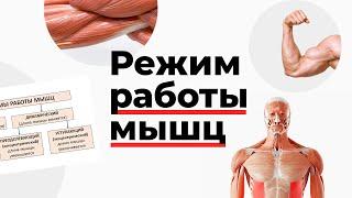 Режим работы мышц
