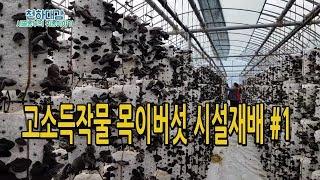 고소득작물 목이버섯 재배 노하우 재배기술 공개 귀농작물 [시골농부 천하대감]