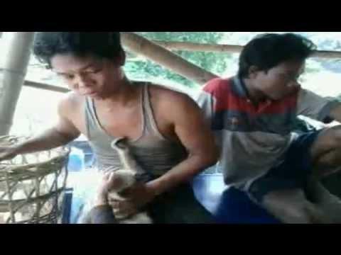 Im  Dschungel  von Myanmar