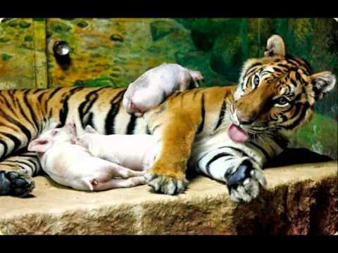 Усыновители в мире животных