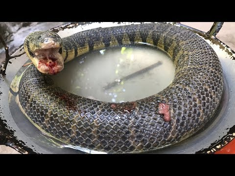 WOW! Cooking Snake Soup Recipe In Forest Eat To Survival