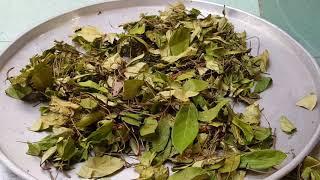 Chặt nhỏ và phơi cây Hà Thủ Ô | Phương thuốc quý để đen râu tóc , khỏe gân cốt , kéo dài tuổi thọ|