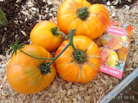 Сорт томата Медовый салют. Сколько весит самый крупный помидор. | крупноплодный | помидоры | томатов | сладкие | помидор | медовый | вкусный | томата | томат | сорта