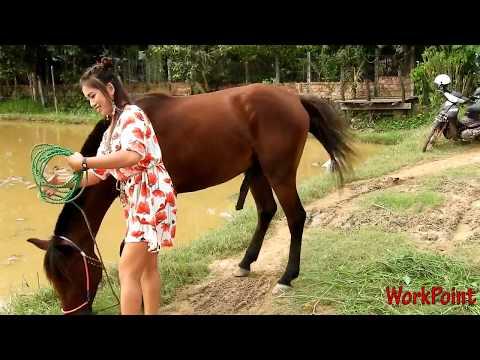 Gadis Cantik Maen dengan Kuda