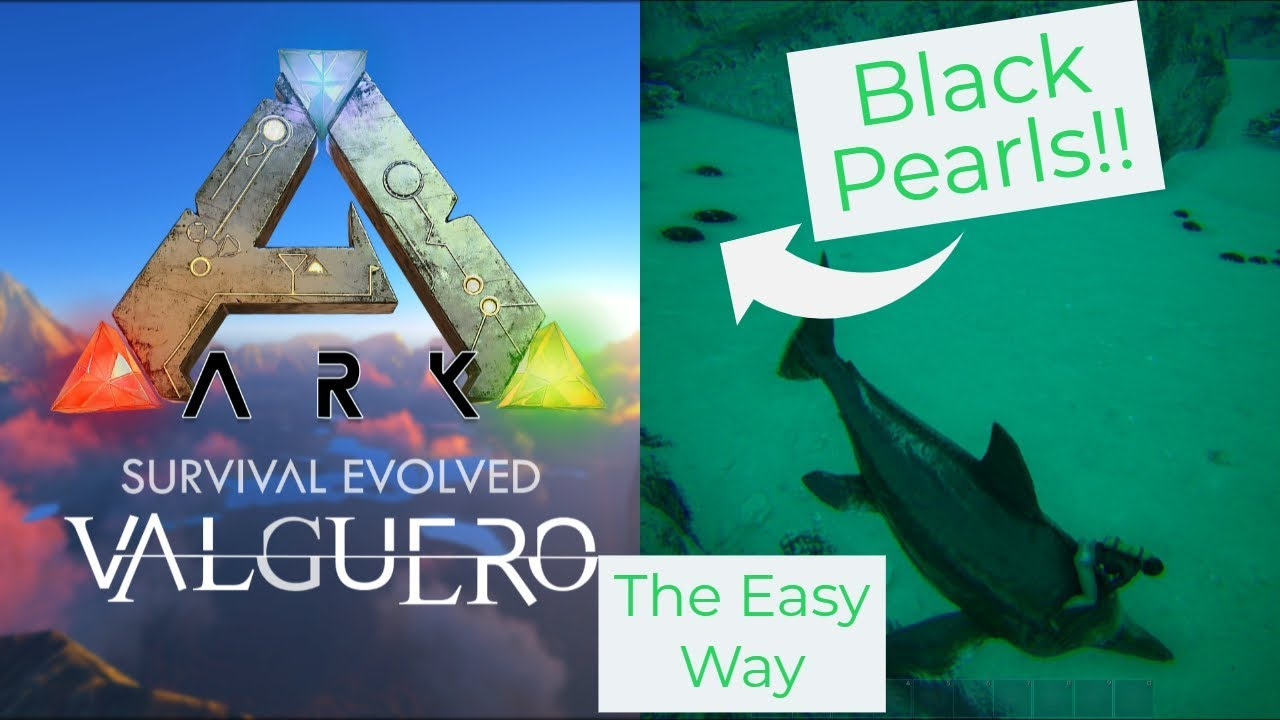 Valguero Black Pearls Location And Gathering On Official Youtube In this ark extinction how to get black pearls guide i will be covering the best method of getting so many black pearls in. valguero black pearls location and gathering on official