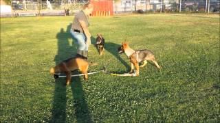 Wolfgang Rader German K9 Expert The Expert Dog Training