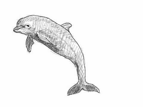 Como dibujar delfín paso a paso - Dibujos de animales - YouTube