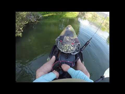 Bass Fishing - Wild Aussie Bass - Northern Rivers NSW