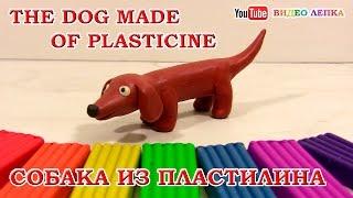 СОБАКА ИЗ ПЛАСТИЛИНА - ТАКСА. Лепка для детей | Видео Лепка