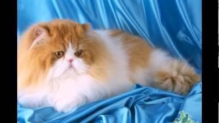 самые красивые коты