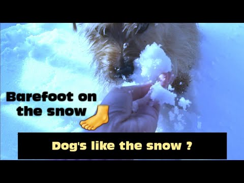 Barefoot on the snow?| Playing with snow