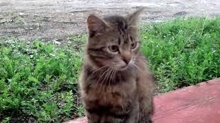 Коты Кузя и Марсик