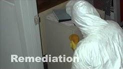 Mold Inspections Mold Removal Pensacola Florida
