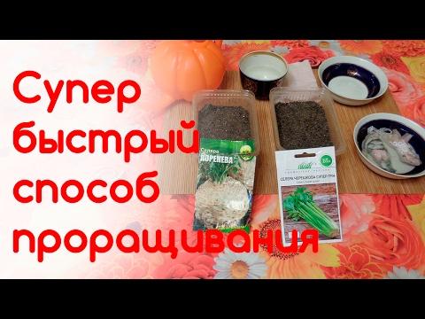 Семена сельдерея - польза растений