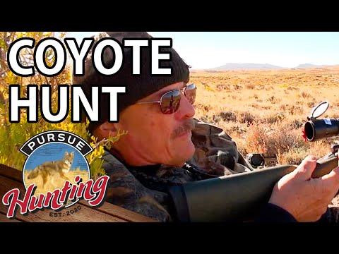 Wyoming Coyote Hunt - Part 4   Predator Hunting