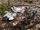 """F86-A """"Sabre"""" Jet Fighter Plane Crash Site, Staceyville ME"""