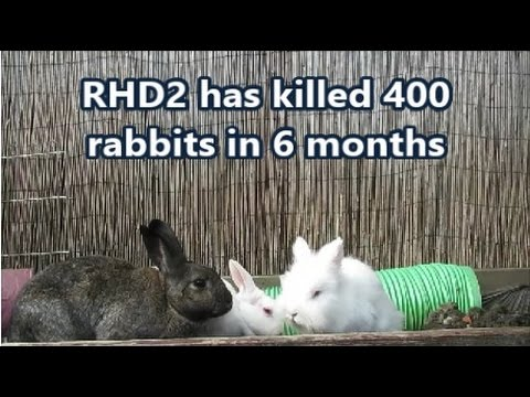 Important info for UK Rabbit Owners!  *RHD2 - NEW VACCINE AVAILABLE*