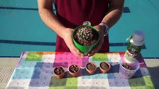 Lav taşı nedir ve  nasıl kullanılır Beybek