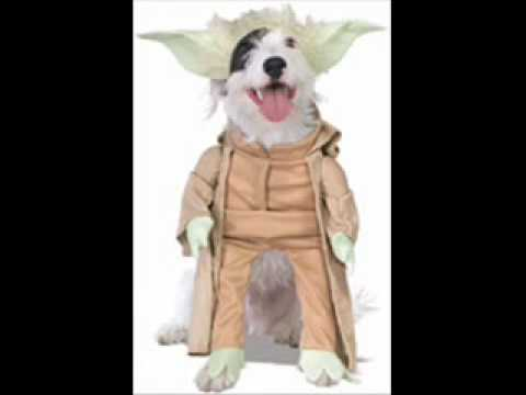 Teacup Toy Small Dog Halloween Costumes - small dogs breeds - YouTube
