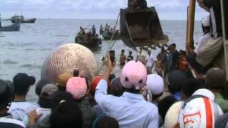 Lễ mai táng Cá Ông - whales stranded in Vietnam