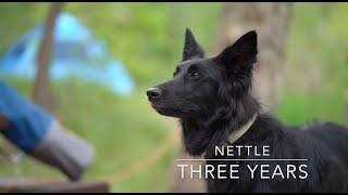 Nettle   Groenendael   Three Years