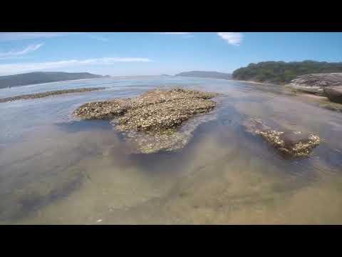 Patonga Creek Kayak - 22 Jan 2019
