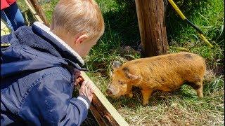 Vlog Мы на ферме домашних животных!